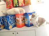20081026搬家了:cat06