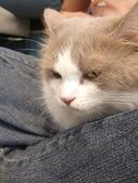 20081026搬家了:cat03