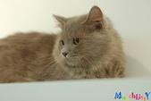 20100308 2009 kittens:DSC_8526