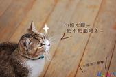 20090523 三峽遇到貓:04-DSC_7220