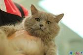 20100308 2009 kittens:DSC_8528