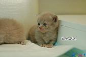 20100308 2009 kittens:DSC_7679