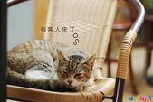 20090523 三峽遇到貓:01-DSC_7217