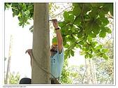 爬桿的猴子們:Canon PowerShot A710 IS40.jpg