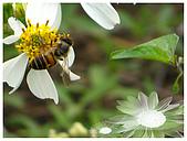 生態:花與蜂