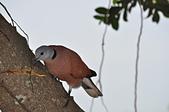 鳥類:DSC_0251.jpg