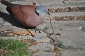 鳥類:DSC_0260.jpg
