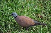 鳥類:DSC_0145.jpg
