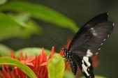 昆蟲:2012花東三日遊193.jpg