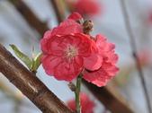 花草樹木自然風景:DSC_0453-1.jpg