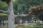 鳥類:DSC_0041.jpg