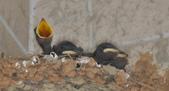 鳥類:DSC_0201.jpg