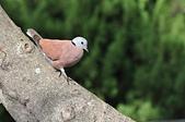 鳥類:DSC_0230.jpg