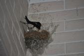 鳥類:DSC_0660.jpg
