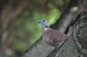 鳥類:DSC_0233.jpg