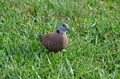 鳥類:DSC_0168.jpg