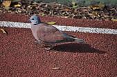 鳥類:DSC_0271.jpg