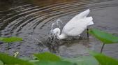鳥類:DSC_0051-1
