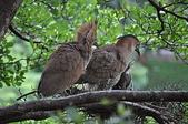 鳥類:DSC_0173.jpg