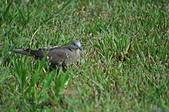 鳥類:DSC_0313.jpg