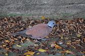 鳥類:DSC_0070.jpg