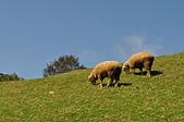 動物:青青草原