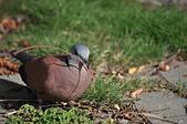 鳥類:DSC_0263.jpg