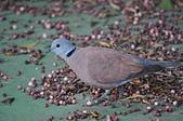 鳥類:DSC_0277.jpg