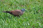 鳥類:DSC_0179.jpg