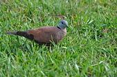 鳥類:DSC_0180.jpg