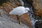 鳥類:DSC_0014-1