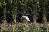 鳥類:DSC_0047.jpg