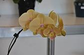 蘭花:DSC_0281.jpg