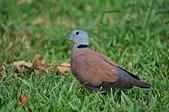 鳥類:DSC_0198.jpg