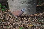 鳥類:DSC_0067.jpg