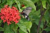 昆蟲:2012花東三日遊182.jpg