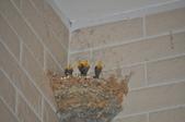 鳥類:DSC_0174.jpg