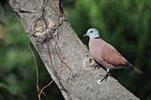 鳥類:DSC_0228.jpg