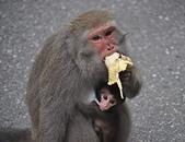 動物:DSC_0077..jpg
