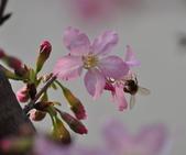 花草樹木自然風景:DSC_0458-1.jpg