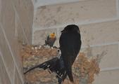 鳥類:DSC_0169.jpg