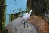 鳥類:DSC_0021-1