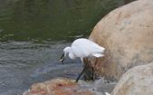 鳥類:DSC_0009-1