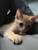 寵物:IMG_4464.JPG