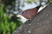 鳥類:DSC_0239.jpg