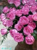 玫瑰花:1069110337_x.jpg
