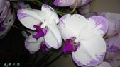 蘭花:1067459389_m.jpg