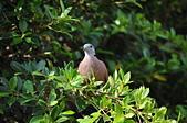 鳥類:DSC_0132.jpg