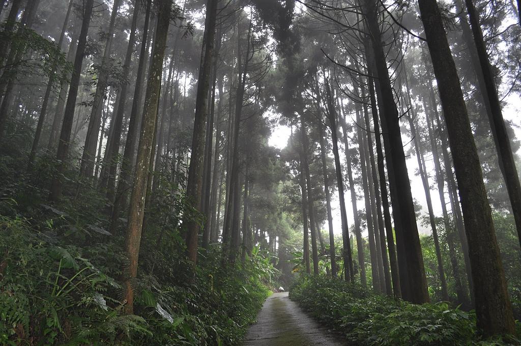 花草樹木自然風景: