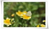 昆蟲:DSC_0441-1.jpg
